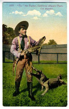 1905 Postcard Tex Trainer Alligator Farm Los Angeles