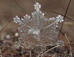 Prachtige foto's van Andrew Onoskin die buitengewoon veel details en structuur van sneeuwvlokjes onthullen (© Andrew Osokin/Rex Features)