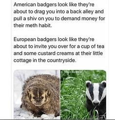 34 random memes that & # ll inject your day with some laughter – Memebase – funny … – funny – Animals Slytherin, Hogwarts, Teen Memes, Dankest Memes, Animal Memes, Funny Animals, Adorable Animals, Funny Jokes, Hilarious