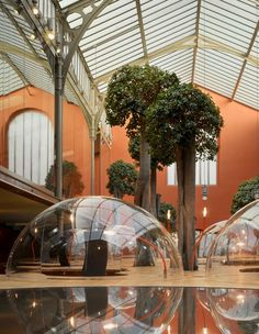 Natural Office Design with Principle of the Hemisphere – Architects Pons & Huot Paris Office, with live trees growing outta desks!