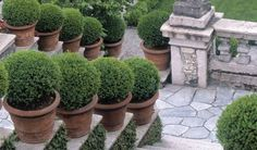 Garden tours for small groups of up to 14 people, six nights, with local guides and visits to private and public gardens in Italy. Luxury garden tours from Expressions Holidays Formal Gardens, Small Gardens, Outdoor Gardens, Outdoor Rooms, Italian Farmhouse, Paradise Garden, Italy Holidays, Italian Garden, Italy Tours