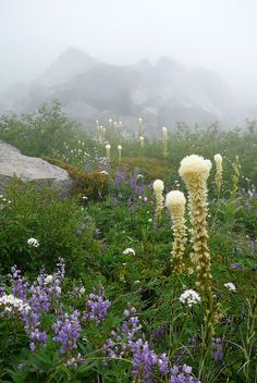I want to romp here among the wild flowers as the mountains peek through the opaque mist.  ~Charlotte (PixieWinksFairyWhispers)