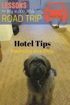 Lessons from My 4000 Mile Road Trip ~ Hotel Tips for Traveling with Dogs via Future Expat #petfriendlytravel #dogs