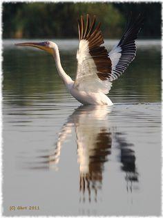 Danube Delta, Romania Milan Kundera, Danube Delta, Poems, Places To Visit, Birds, Country, Animals, Beautiful, Romania
