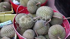 Durian Stink Fruit in Singapore - Stock Footage | by JahnProductions