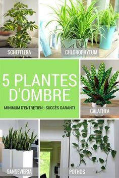 5 plantas verdes de sombra interior - Rebel Without Applause Inside Garden, Inside Plants, Aquaponics System, Shade Plants, Green Plants, Chlorophytum, Diy Plant Stand, Plant Stands, Plantar