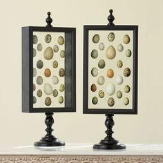 Egg shadowbox display case from Wisteria.