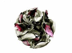 Pink Plant, Cabbage, Vegetables, Plants, Veggies, Vegetable Recipes, Cabbages, Plant, Collard Greens