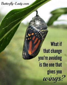 What if the change you're avoiding is the one who gives you wings?
