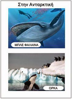 Ιδέες για το νηπιαγωγείο(εποπτικό υλικό,δραστηριότητες,κατασκευές). Polar Animals, Greek Language, In Kindergarten, Continents, Whale, Preschool, Education, Winter, Crafts