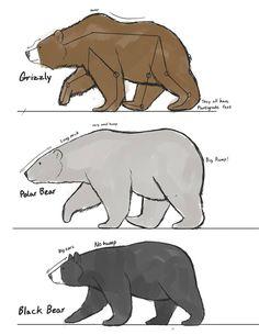 Bear studies by Dj-Rodney on DeviantArt Bear studies by Dj-Rodney on DeviantArt State Your Business by Dj-Rodney on DeviantArt<br> Animal Sketches, Animal Drawings, Art Sketches, Art Drawings, Drawings Of Bears, Poses References, Bear Art, Drawing Reference, Art Tutorials