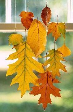 wiszące liście