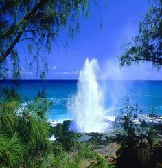 The Blow Hole, Oahu, HI. There is a hole in the volcanic rock. The water crashes underneath it and blows out the top. Like a whale.