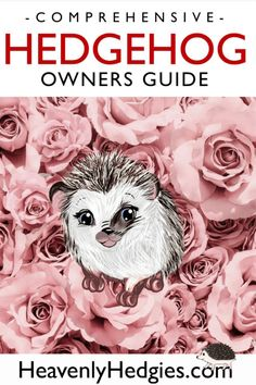 This comprehensive hedgehog owners guide will start you off right when owning a hedgehog. It contains all the information you need to be a confident hedgehog parent. Hedgehog Care, Hedgehog Habitat, Diy Hedgehog Toys, Guinea Pig Toys, Guinea Pigs, Cat Toys, Hedgehog Supplies, Pet Vacuum, Pet Allergies