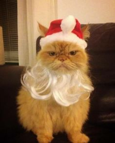 Christmas spirit? Seriously? #cat