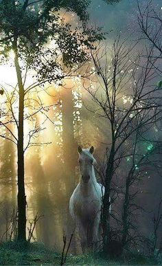Totally reminds me of my dream of the freed white horse that turned and looked at me All The Pretty Horses, Beautiful Horses, Animals Beautiful, Beautiful Scenery, Horse Photos, Horse Pictures, Animals And Pets, Cute Animals, Majestic Horse