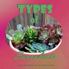 Scalloped, chubby, speckled or blushed, there are many Types of Succulents. Plants, Plant Projects, Plant Design, Apartment Plants, Garden Plants, Xeriscape, Fairy Garden Diy, Types Of Succulents, Propagating Succulents