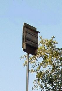 Find how to build a bat house here!  Florida Bat Conservancy | Backyard Bat Houses