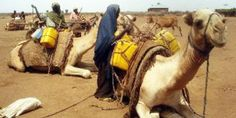Somali women load water containers on camels. Somalia is embroiled in an endless cycle of civil war, religious conflict, clan violence and d. Llamas, Somali, Camels, The Twenties, Africa, Water Containers, Horses, Events, War