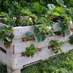 Pallets Woodworking Ideas Strawberry Pallet Planter by Lovely Greens - Readers use Lovely Greens DIY instructions to make their own Strawberry Pallet Planters Strawberry Beds, Strawberry Planters, Strawberry Garden, Wood Pallet Planters, Diy Planters, Wood Pallets, Pallet Wood, Recycled Planters, Planter Ideas