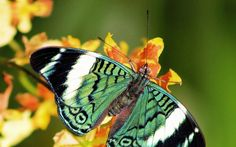 wallpaper YELLOW  BUTTERFLY  | Butterfly Wallpapers
