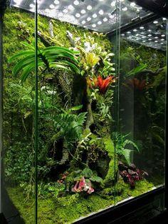 461 best images about VivariumPaludariumOrchidarium reptile terrarium aquarium terrarium Aquarium Terrarium, Gecko Terrarium, Orchid Terrarium, Reptile Terrarium, Terrarium Plants, Glass Terrarium, Gecko Vivarium, Terraria, Indoor Garden