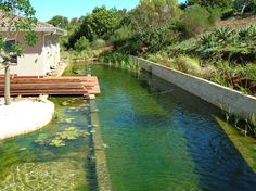 Organic pools | Eco Friendly and Chlorine Free: The True Potential of Swimming Pools
