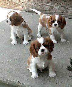 Three Little Clones