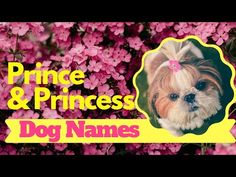 Top 20 Best Prince And Princess Dog Names With Meaning 2020 ! Unique Dog Names - YouTube Cute Names For Dogs, Best Dog Names, Pet Names, Best Dogs, Cute Dogs, Nail Art Designs 2016, Names With Meaning, Prince And Princess, Dog Lovers