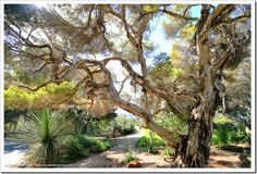 Succulents and More: Quick tour of the San Diego Botanic Garden