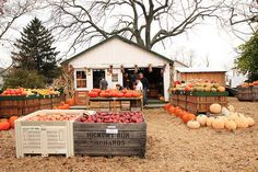 I love cute, little pumpkin shacks