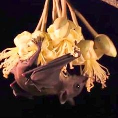 What Would A World Without Bats Be Like? Like Bats? Help Bats by liking n sharing this video http://www.batsrule.info/2017/06/what-would-world-without-bats-be-like.html