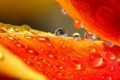 orange drops by Thibaut Blais, via 500px