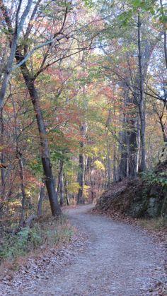 Trail beauty by Bruce Stambaugh