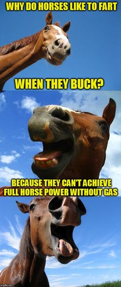 c31f7a3c6 Just Horsing Around | WHY DO HORSES LIKE TO FART WHEN THEY BUCK? BECAUSE  THEY