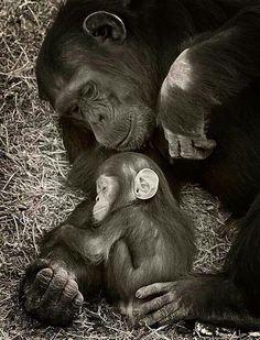 L amour est partout...tout être vivant sur cette planète en est doté...que personne n en doute