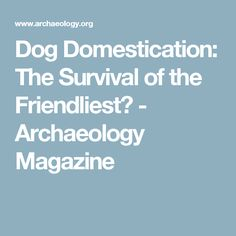 Dog Domestication: The Survival of the Friendliest?  - Archaeology Magazine