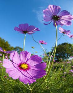 Beautiful Summer Flowers سبحان الله وبحمده سبحان الله العظيم !!