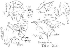 ドラゴンの翼膜の流れについて