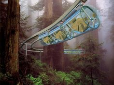 Shweeb Monorail Technology - Forest/Woodlands