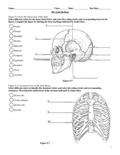 Anatomy and Physiology Coloring Workbook Answer Key . 27 Unique Anatomy and Physiology Coloring Workbook Answer Key . 43 Fresh Anatomy and Physiology Coloring Workbook Answers Coloring Pages For Grown Ups, Free Adult Coloring Pages, Anatomy Coloring Book, Coloring Books, Anatomy Bones, Heart Anatomy, Skeleton Anatomy, Medical Anatomy, Human Anatomy And Physiology