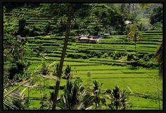 Indonesien – Reisterrassen von Volker Haak