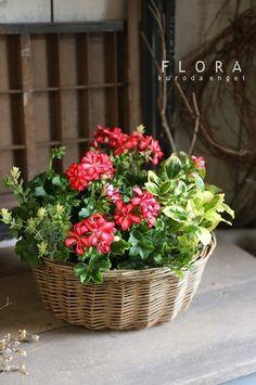 フローラのガーデニング・園芸作業日記-アイビーゼラニウム 寄せ植え