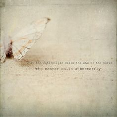 What the caterpillar calls the end of the world, the master calls a butterfly ~Richard Bach