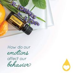 How do our emotions affect our behavior?  Candace Pert explains Emotional states or moods are produced by the various neuropeptide ligands and what we experience as an emotion or a feeling is also a mechanism for activating a particular neuronal circuit simultaneously throughout the brain and bodywhich generates a behavior.   #essentialoils #essentialtips