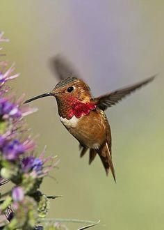 Hummingbird by Susan Gary