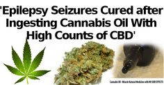 Epilepsy Seizures Cured after Ingesting Cannabis Oil With High Counts of CBD |Natural Cures Not Medicine