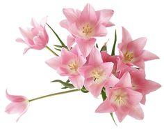ARMAZÉM DAS FLORES: Tubes de flores variadas V