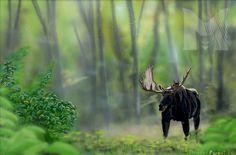 Orignal airbrush sur bois