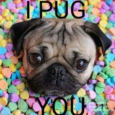 I pug you